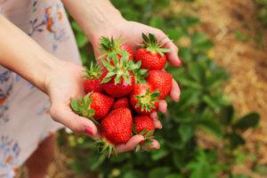 Zwei Hände formen eine Schale für eine Portion Obst.