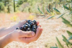 Die Polyhenole der Olive wirken antioxidativ.
